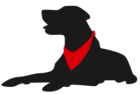 New Red Bandana Pet Services LLC | Dog Walking and Pet Sitting Services DD76